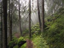 Bos in daglicht Stock Afbeelding
