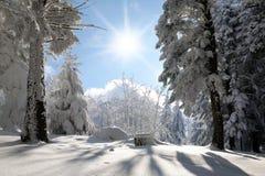 Bos dat door de sneeuw wordt behandeld Stock Fotografie