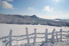 Bos dat door sneeuw wordt behandeld Stock Fotografie