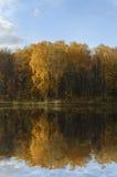 Bos dat in meer wordt weerspiegeld stock afbeeldingen