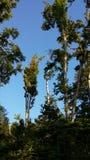 Bos de aardhemel van het bomenleven Stock Foto
