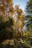 Bos in de berg royalty-vrije stock afbeelding
