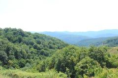 Bos in de bergen Stock Afbeeldingen