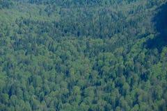 Bos in de bergen, de mening van de hoogte Royalty-vrije Stock Fotografie
