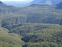 Bos in de blauwe bergen Royalty-vrije Stock Fotografie