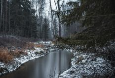 bos de bomen koude dag van de de winterrivier stock foto's