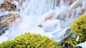 Bos de cascadestroom van de close-upwinter die door groen en van angst verstijfd mos wordt omringd Hoge minerale inhoud in bergwa stock videobeelden