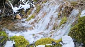 Bos de cascadestroom van de close-upwinter die door groen en van angst verstijfd mos wordt omringd Hoge minerale inhoud in bergwa stock video