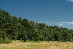 Bos in de de zomerzon Royalty-vrije Stock Afbeelding