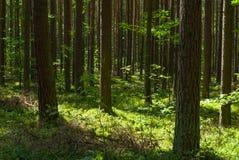 Bos in de de zomerzon Royalty-vrije Stock Foto's