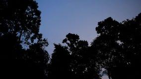 Bos in de donkere nachten en de bliksem stock footage