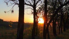 Bos in de gouden-rode zonsondergang Silhouetten van bomen stock footage