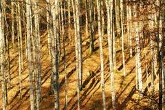 Bos in de Herfst Royalty-vrije Stock Fotografie