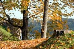 Bos in de herfst stock foto