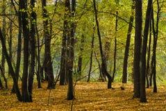 Bos in de herfst stock foto's