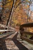 Bos in de herfst Stock Afbeeldingen