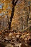 Bos in de herfst Royalty-vrije Stock Afbeelding