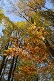 Bos in de herfst Stock Afbeelding