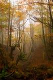 Bos in de herfst Royalty-vrije Stock Afbeeldingen