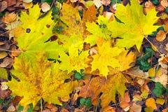 Bos in de herfst Royalty-vrije Stock Foto's