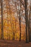 Bos in de herfst Royalty-vrije Stock Foto
