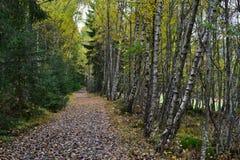 Bos in de herfst - bosweg Royalty-vrije Stock Afbeeldingen
