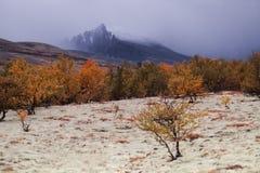 Bos in de herfst in de vallei onder de bergen Royalty-vrije Stock Afbeeldingen