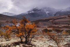 Bos in de herfst in de vallei onder de bergen Royalty-vrije Stock Foto