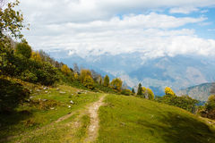 Bos in de herfst in himalayan bergen stock foto's