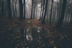 Bos in de herfst met gevallen bladeren stock foto's