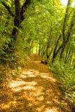 Bos in de herfst met manier in licht en schaduw stock afbeeldingen