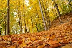 Bos in de herfst, selectieve nadruk Royalty-vrije Stock Fotografie