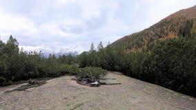 Bos in de Herfst stock videobeelden