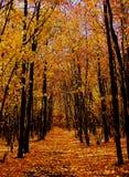 Bos in de herfst, weg, gele bladeren royalty-vrije stock afbeelding