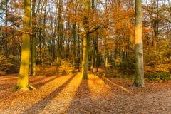 Bos in de herfstkleuren stock foto