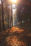 Bos in de herfstkleuren Royalty-vrije Stock Foto's