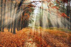 Bos de herfstochtend in een schilderachtig bos Stock Afbeeldingen