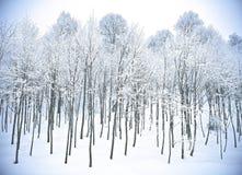 Bos de heuvelssneeuw Kartepe, Kocaeli, Turkije van de winter Royalty-vrije Stock Foto's