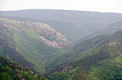 Bos in de Kaap Breton Royalty-vrije Stock Afbeeldingen