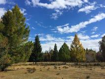 Bos in de Kurai-steppe De gouden herfst in Altai, Rusland stock foto