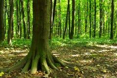 Bos in de lente Royalty-vrije Stock Foto