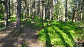 Bos in de lente Stock Afbeeldingen