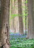 Bos de lentebloemen Royalty-vrije Stock Afbeelding