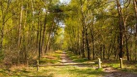Bos in de lentekleuren Royalty-vrije Stock Afbeeldingen