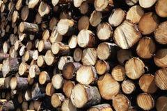 Bos de logboekenachtergrond van pijnboombomen Royalty-vrije Stock Foto's