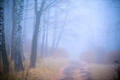 Bos in de mist Stock Afbeeldingen