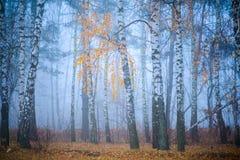 Bos in de mist Royalty-vrije Stock Foto