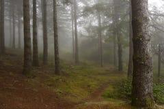 Bos in de mist stock foto's