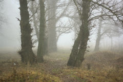 Bos in de mist Royalty-vrije Stock Foto's