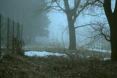 Bos in de mist Stock Afbeelding